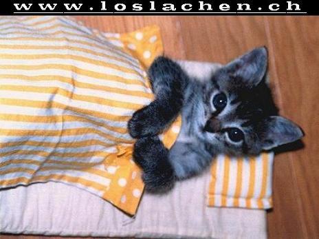 http://www.loslachen.ch/Lustiges/Lustige%20Tiere/Lustige_Tiere_2/Gute_Nacht.jpg