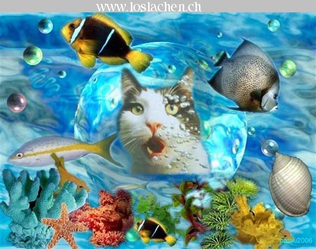 Related pictures fun bilder lustig tiere veroeffentlicht in fun
