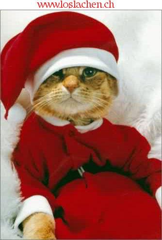 Lustige bilder weihnachten tiere