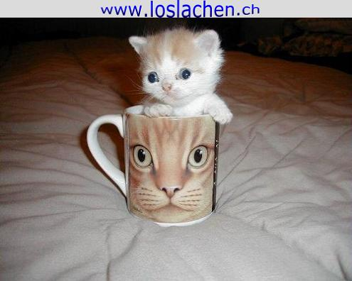 Katzen tiere humor lustig weihnachten desktop hintergründe picture