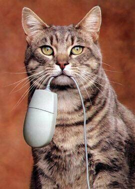 Katz hat die Maus