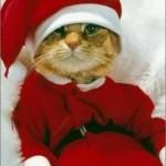 weihnachten_0074