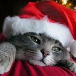 christmascat