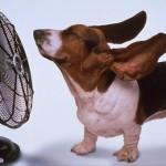 heiss_hund_ventilator