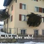 baum_2_loslachen_ch