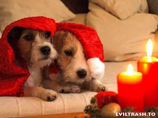 Noch ein paar Santa Claus Bilder