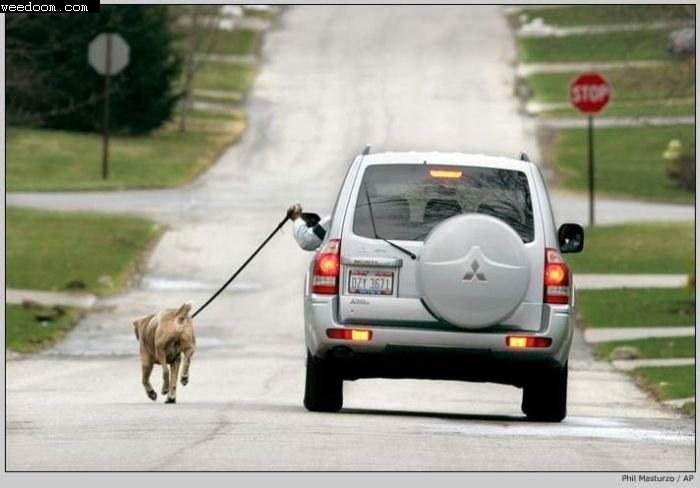 Geht man so mit dem Hund Gassi?