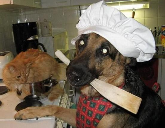 Tierisch kochen
