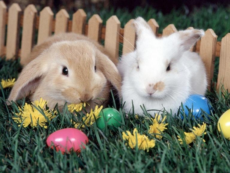 Ostern und ihre Hasen