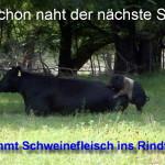 schwinefleisch_rindfleisch_skandal