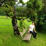 Wachholderbaum