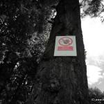 Baumklettern verboten?