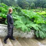 Silvia vor den riesen Rhabarberpflanzen