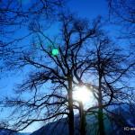 Sonne in Calfreisen