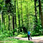 Wald o Wald du bist sooo schön