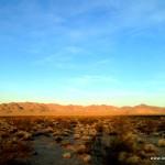 Die Wüste erwacht