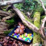 Osterhase im Wald Geochache