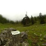 urtanne von steinberg