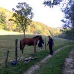 anhängliche Pferde