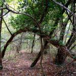 Der Baum als Zopf