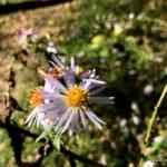 Blume mit Tau