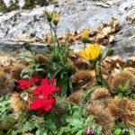 Kastanien Blumen gemisch
