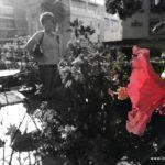 Hibiskus und Renza