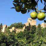 Zitronen Burg