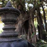 Altes Tor bei altem Baum