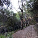 Waldweg in Malaga