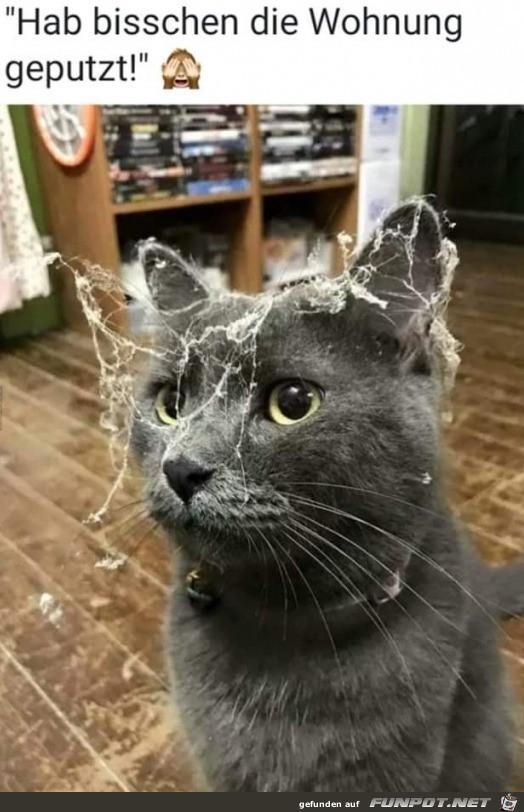 Gute Katze